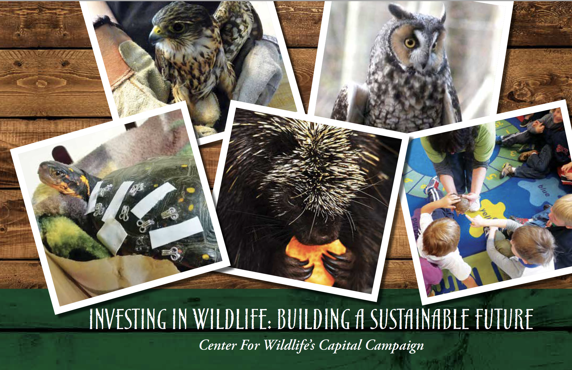 Center For Wildlife- Capital Campaign Materials
